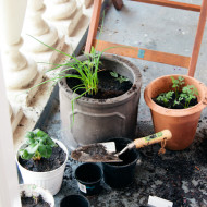 my balcony garden – an update